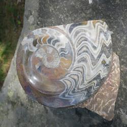 Ammoniitti fossiili 2,8kg