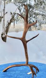 poronsarviteline korkeus 52cm 5-haarainen pöytäkoriste