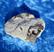 Stauroliitti  26g 42x35x15mm Khibini Venäjä Hi12d