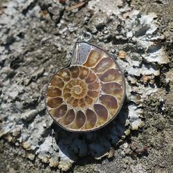 Riipus ammoniitti fossiili, Madagaskar