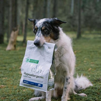 Nature's Protection Superior Care Sensitive Lammas All Breeds 10 kg
