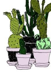 Vihreät kaktukset
