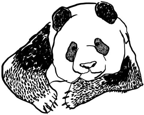 Pandakortti