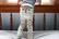 Zoocchini leggingsit + sukat setti (Fiona the Fawn)