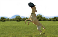 Dog toy Kong Extreme Flyer Frisbee 25cm