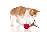 Cat toy Smart Feather