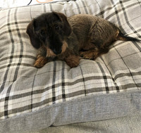 Koiran tyyny ruudullinen harmaa L