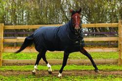 Horseware Trot HEAVY