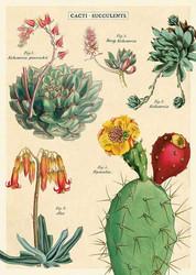Juliste Cavallini - Cacti & Succulents