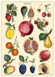 Juliste Cavallini - Fruit 2