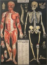 Juliste Cavallini - L'Anatomie