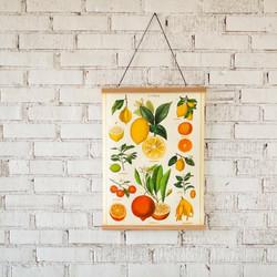 Juliste Cavallini - Citrus