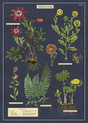 Juliste Cavallini - Herbarium