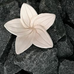 Kiuaskukka, lilja, luonnonvalkoinen 1 kpl