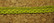 Puuvillapitsi lime, VI203