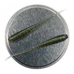 Annelida 77mm 5-pack färg: Smaragdi