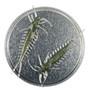 Arthropod 65mm 6kpl väri: Smaragdi