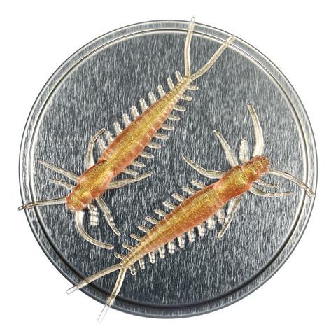 Arthropod 65mm 6kpl väri: Sitriini